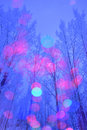 Winter forest and illumination colorful i took this photo with multiple exposure Royalty Free Stock Image