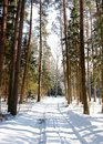 Winter Forest Landscape Royalty Free Stock Photo