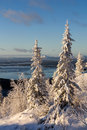Winter forest landscape kola peninsula russia Royalty Free Stock Image