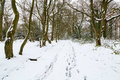 Winter forest landscape snow scene of english woods after snowfall Stock Photos