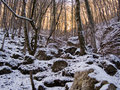 Winter forest mountains Stock Images
