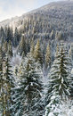 Winter forest mountainside Royalty Free Stock Photo