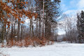 Winter Forest in Poland Stock Image