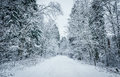 Winter forest road russian Royalty Free Stock Images