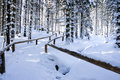 Winter forest scenery Stock Photography