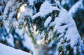 Winter into the forest with snow on the trees and sun light through branches Royalty Free Stock Image