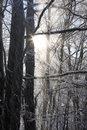 Zimný les s lúčmi