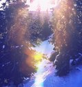 Winter forest in sunny day Stock Photography