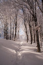 Winter forest trees covered with snow sun showing through Stock Images