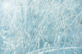 Winter frost abstract background out of focus field Royalty Free Stock Photo