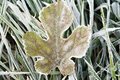 Winter frost on leaf