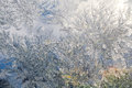 Winter Frost Patterns on Window Royalty Free Stock Photo