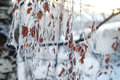 Winter frozen tree branches Royalty Free Stock Photo