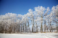 Winter frozen trees in meadow Royalty Free Stock Photography