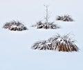 Winter garden frozen plants on a snowy plain Stock Photography