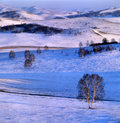 Winter grassland scenery Stock Photo