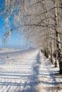 Winter grove Stock Photo