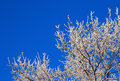 Winter hoar-frost Royalty Free Stock Image