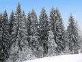 Winter Holiday Theme background Royalty Free Stock Photo