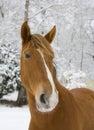 Winter horse Royalty Free Stock Photo
