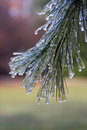 Winter Ice Storm Royalty Free Stock Photos