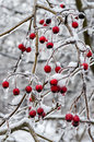 Winter icing icy trees and shrubs Royalty Free Stock Photography
