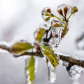 Winter icing icy trees and shrubs Royalty Free Stock Image