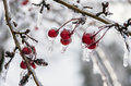 Winter icing icy trees and shrubs Royalty Free Stock Photos