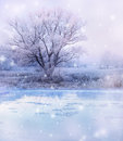 Winter lake magic landscape snowfall over and tree Stock Photography