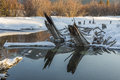 Winter lake reflections snow covered tree trunks jet out from showing in open water in Stock Photography