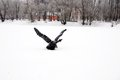 Winter lake with a wrapped bird black sculpture outdoor at snow during wintertime in moscow Royalty Free Stock Images