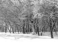 Winter landscape all around is under snow common monochromic Royalty Free Stock Photo