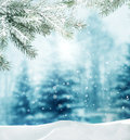 Winter landscape beautiful background with branch spruce Stock Photo