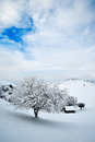 Winter landscape beautiful with frozen tree Royalty Free Stock Images