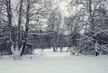 Winter landscape with a birch forest after snowfall in an overcast day Stock Image