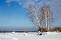 Winter landscape with birches against blue sky in Russia Royalty Free Stock Photo