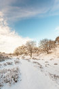 Winter landscape in Dutch national park Veluwe Royalty Free Stock Photo