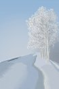 Winter landscape foggy orning trees with snow Stock Images