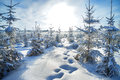 Winter landscape with the forest and the sun beautiful Stock Photography