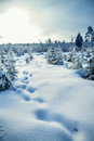 Winter landscape with the forest and the sun beautiful Stock Photos
