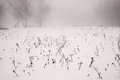 Winter landscape of a frosty field on a foggy background trees Stock Photos