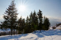 Winter Landscape, green spruce sheltered Format, Christmas tree Royalty Free Stock Photo