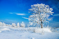 Winter landscape with a lonely tree and the blue sky Stock Photo