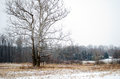 Winter landscape in Michigan Royalty Free Stock Photography