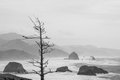 Winter landscape on misty rocky coast with barren tree black and white copy space Royalty Free Stock Photos