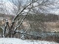 Winter landscape with old beech tree covered with snow and river Royalty Free Stock Photo