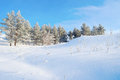 Winter landscape with pines on the hill Royalty Free Stock Photo
