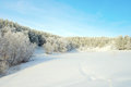 Winter landscape with pines on mountains Royalty Free Stock Photos