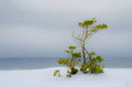 Winter landscape by the sea with a pine tree on a cloudy day Royalty Free Stock Images