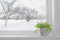Winter landscape seen through the window, and green plant Royalty Free Stock Photo